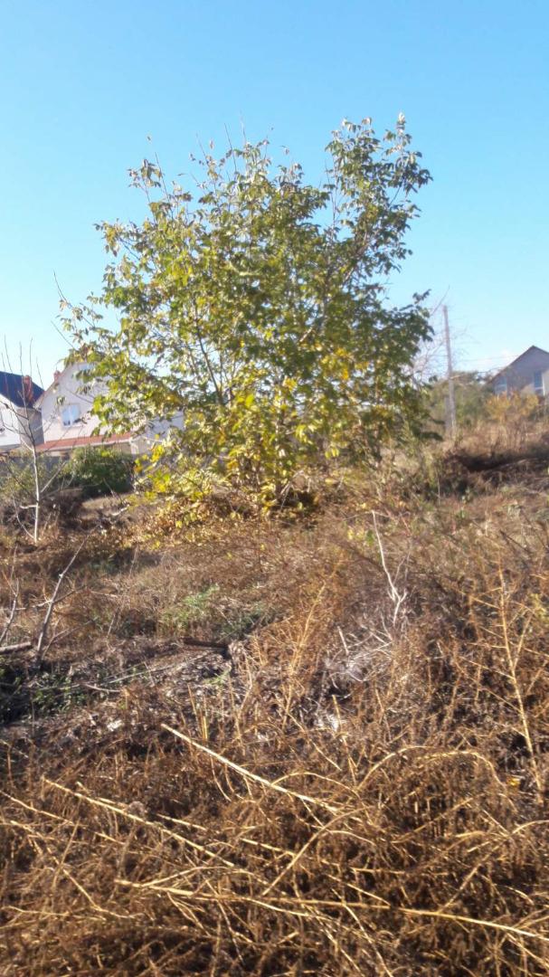 продажа участка номер L-157953 в Червоном Хуторе, фото номер 2
